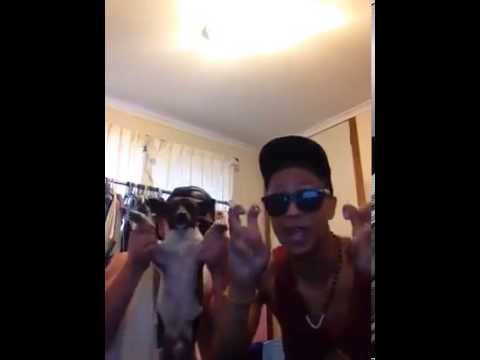 The Alyssa Rosales Dog Video Rap