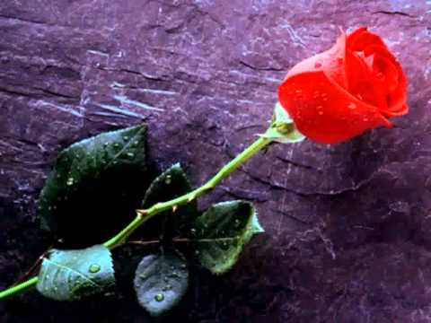 Janis Joplin - The Rose