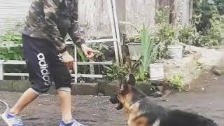 Training Bounding with Master GSD 15 month old