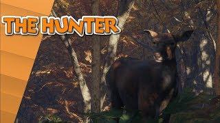 Die Jagt nach dem Foto!★The Hunter | Call of the wild★03★