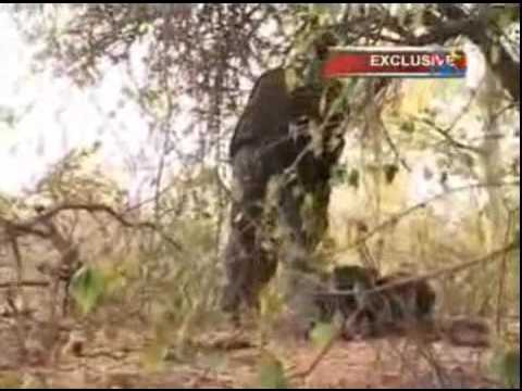 Part2: Oromo Liberation Front in Southern Ethiopia- Inside Rebel territory