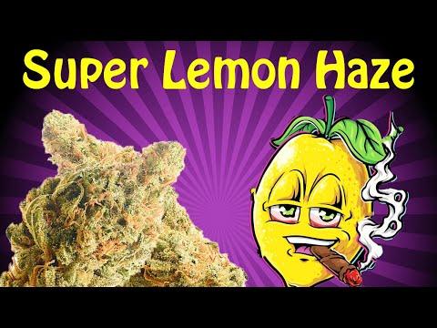 Super Lemon Haze! Strain Review !! -CRTV