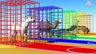 Learn Colors Learn Animal Name and Sound Gorillas w Animals Wild Eat Peppers Col.mp4