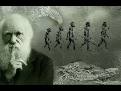 Documentary - The Evolution of the Human Brain