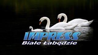 BIAŁE ŁABĘDZIE - IMPRESS - 2015