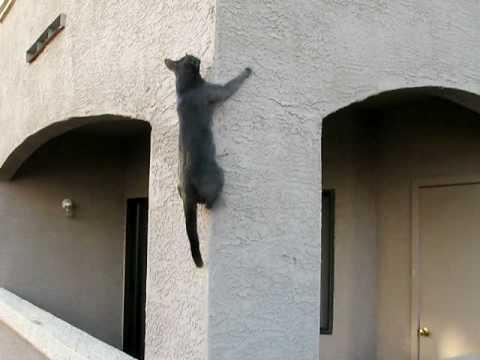 Cat Climbs Wall - YouTube