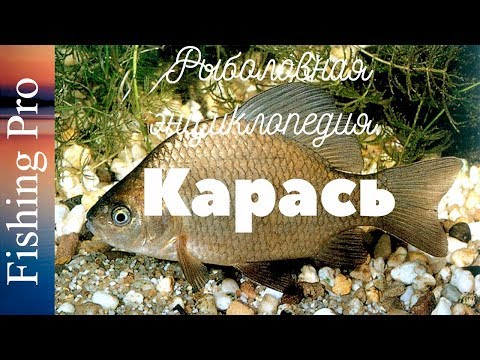 рыбалка энциклопедия рыболова 54 2016