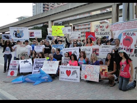 Miami Japanese Consulate Protest Against the Taiji Dolphin Slaughter