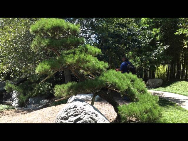The meaning of trees and fish in a Japanese garden