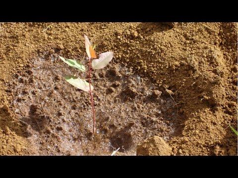 Clique e veja o vídeo Reposição Florestal - Plantio