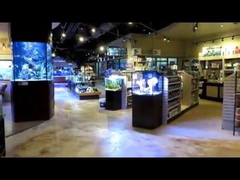 Gallery - Fish
