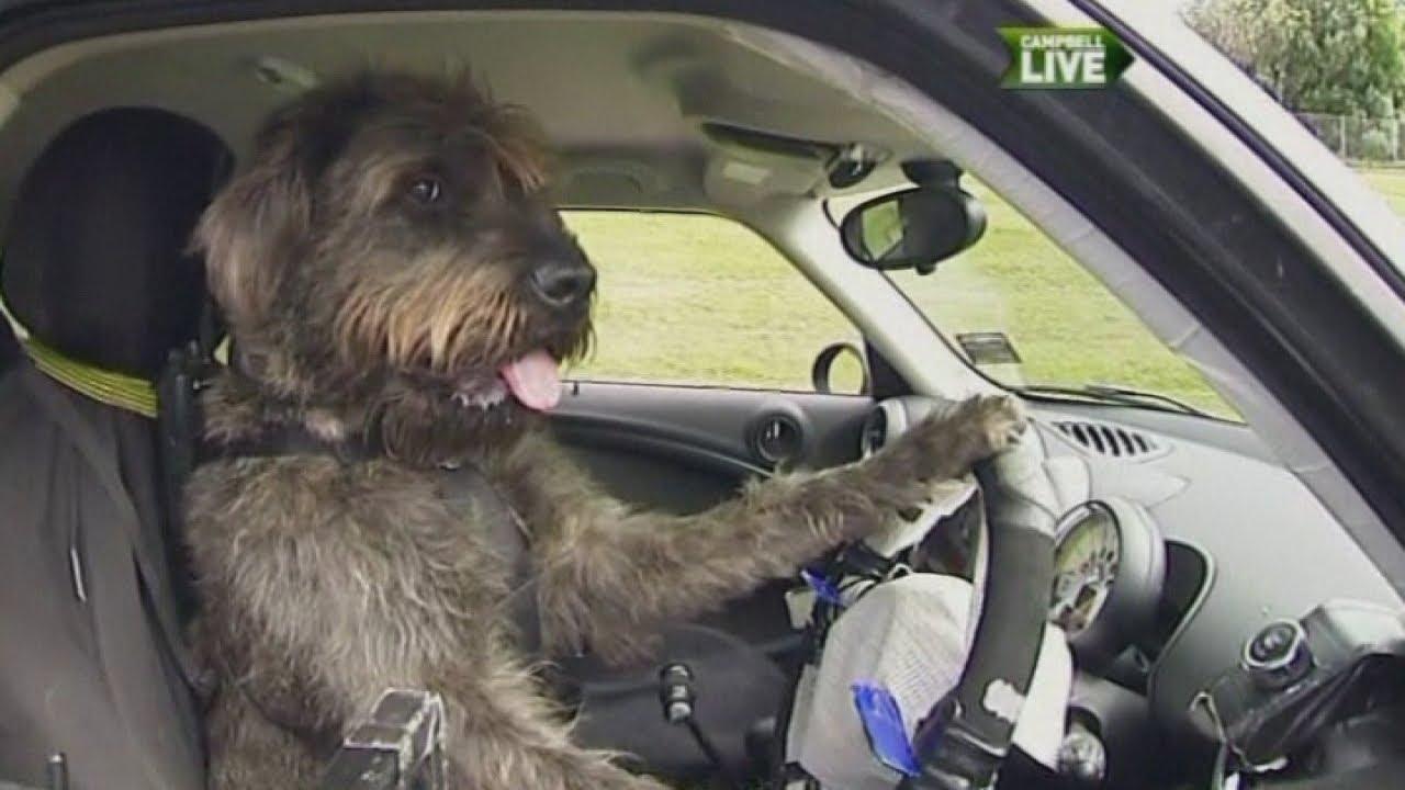 Australia: Tips for DRIVING in Australia - TripAdvisor