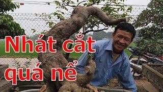 Nhát cắt cách mạng thay đổi cục diện TP bonsai -BShp