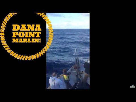 Marlin off dana point youtube for Dana point fish report