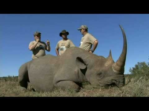 Black Rhino - Witkop Safaris