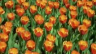 bài hát màu hoa