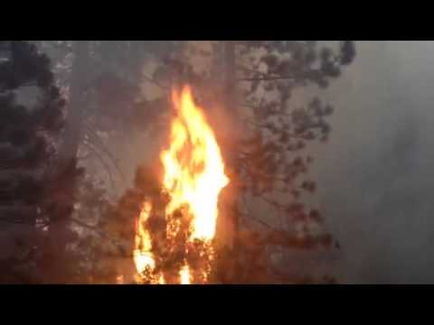 Tree aflame in French fire in Madera County