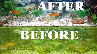Complete Aquarium fish tank clean out step by step guide