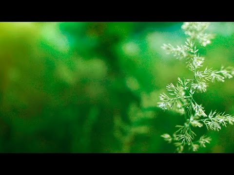 Instrumental Background Music - relaxdaily B-Sides N°2 - for...