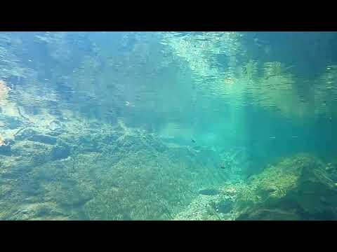 渓流の女王を求めて (動画)