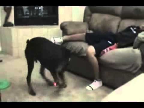 Dog Biting The Penis Of A Boy..funny video