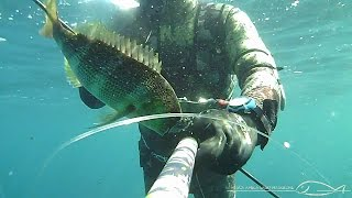 1 Dentice con lo Spara lucertole_SPEARFISHING_chasse sous marine en Corse