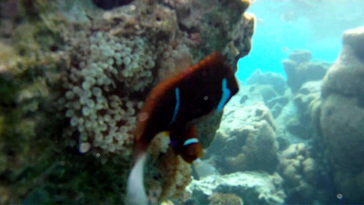 snorkel the aquarium isle of pines new caledonia