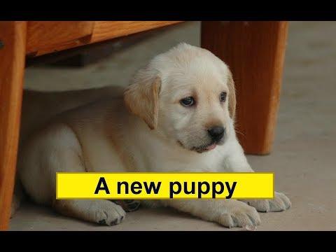 """Аудирование для детей на английском языке. Текст """"A new puppy."""" Listen to the text """"A new puppy""""."""