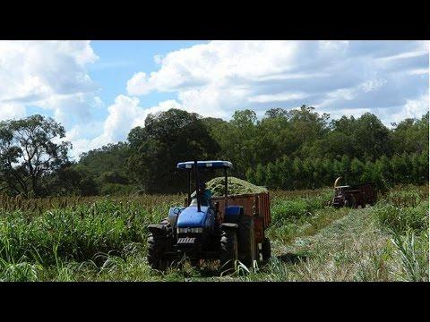 Clique e veja o vídeo Curso Produção de Silagem - Plantio Direto