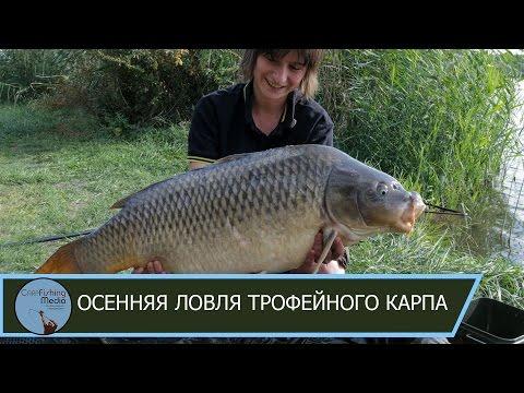 гиг. карп рыбалка