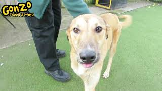 Dogs Trust Manchester - Gonzo