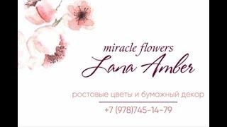Lana Amber... WOW цветы для вашего праздника!!!!! +79787451479