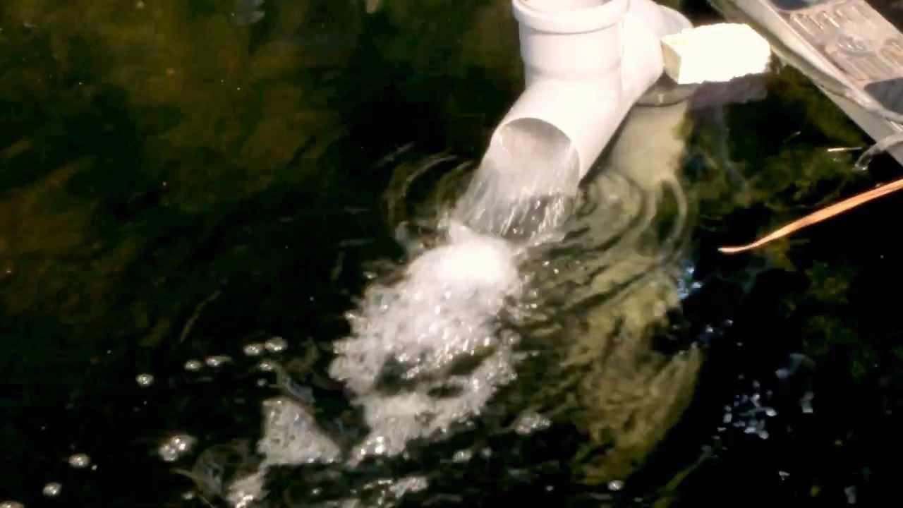 Zierfischversand lufheber dn 70 75cm lang youtube for Zierfisch versand