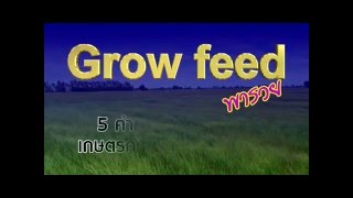 VTR Grow Feed By Bovorn TV