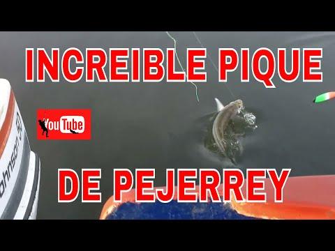 INCREIBLE PIQUE DE PEJERREY FILMADO COMPLETAMENTE