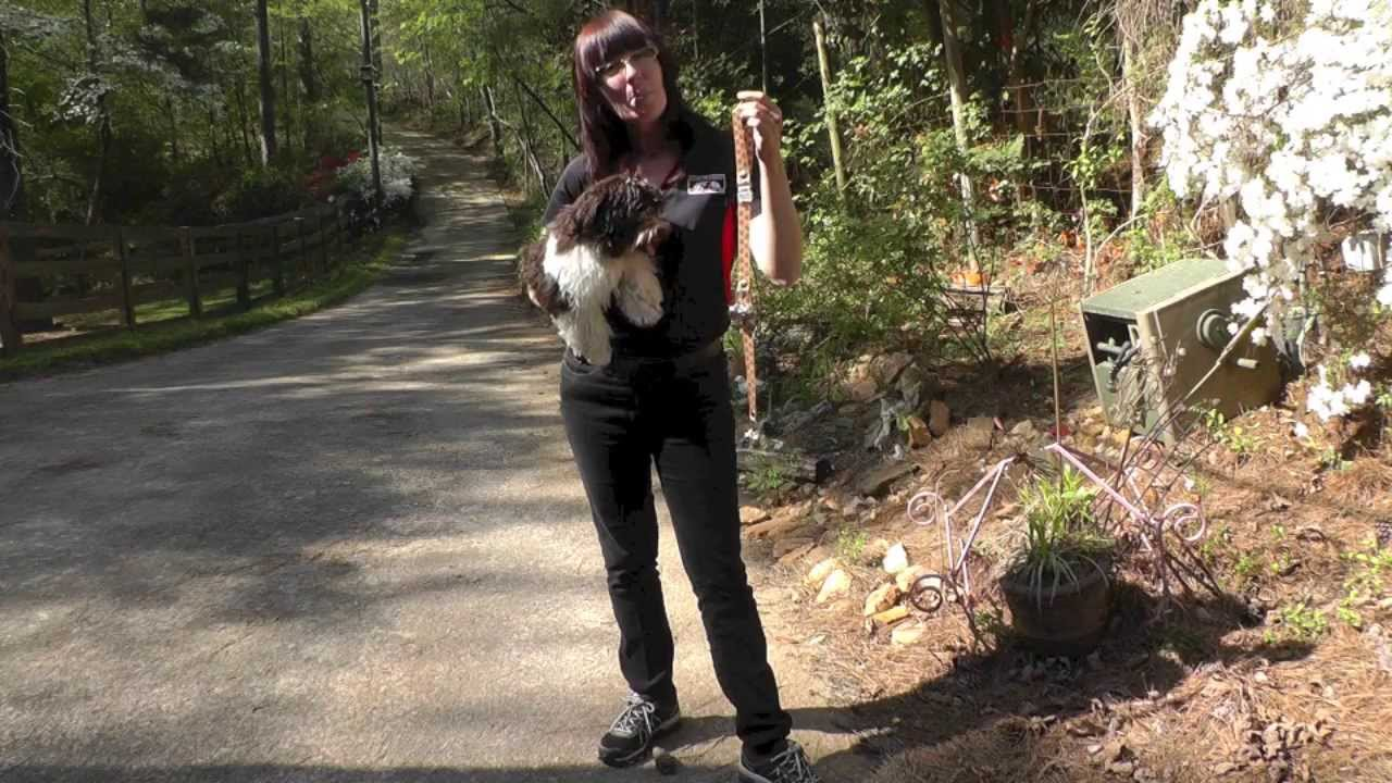 Dog Training How To Teach Your Puppy To Ring A Bell To Be Let Outside Youtube