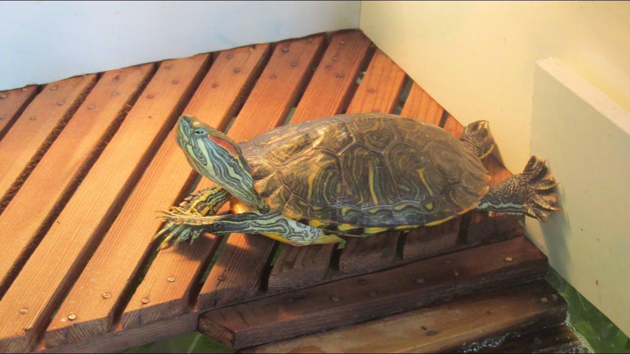 Что нужно для красноухой черепахи, для содержания её дома 40