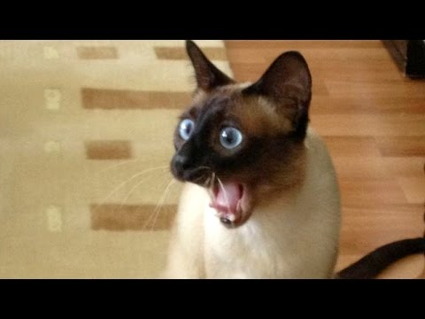 World's funniest animal and pet moments - Funny animal compilation