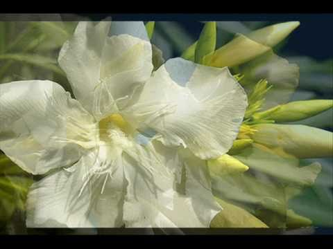 Thomas Newman - White Oleander (2002) - Soundtrack Suite video