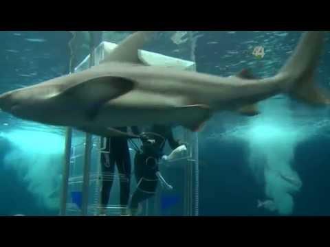 Desde el Zoológico - Tiburones