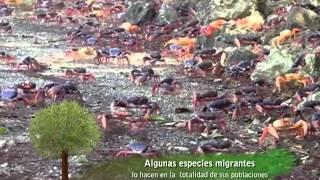 PM 281114 Tierra Sana - Mari Mar Tello