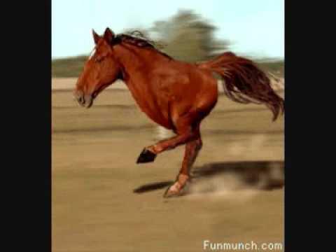 Retarded Horse - YouTube