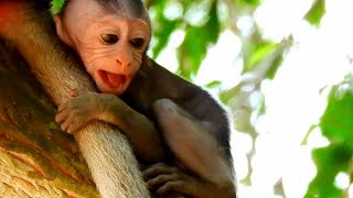 Pity baby monkey was kidnapped by bad monkey, Baby monkey Scares & Cry very Loud