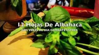 Albahaca Sus Propiedades (Beneficios Medicinales)