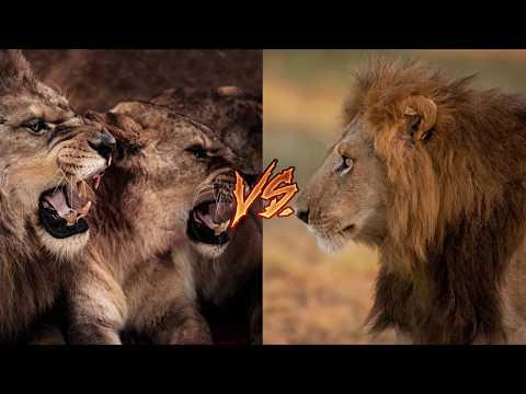 5 Смертельных битв животных. Версус!