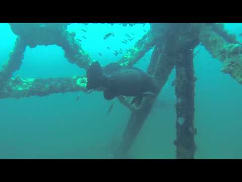 Diving with goliath groupers in Panama City Beach, Florida