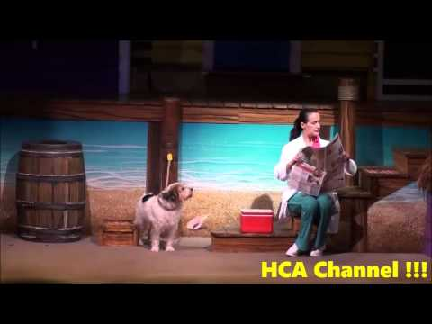 Smart Dog Shows His Abilities.  Pets Ahoy at SeaWorld Orlando