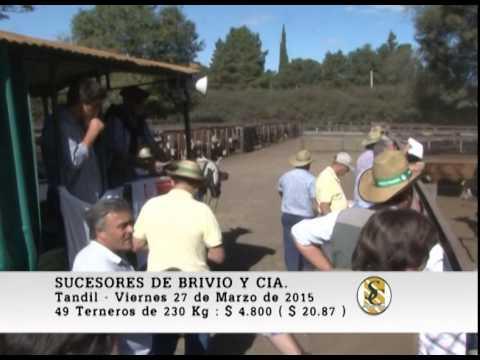 Venta Macho - Sucesores De Brivio Y Cia S.R.L. - Tandil. 27-03-2015