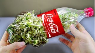 Download Lagu Using a coca cola bottle to grow bean sprouts at home - Amazing life hack! Gratis STAFABAND