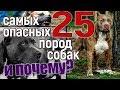 25 самых опасных пород собак и почему?(16+)